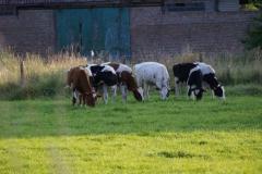 paarden in Natuurpunt natuurgebied in de buurt